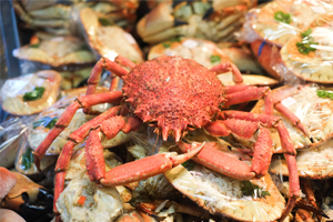 Live spider crabs